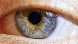 Pupil Dilation